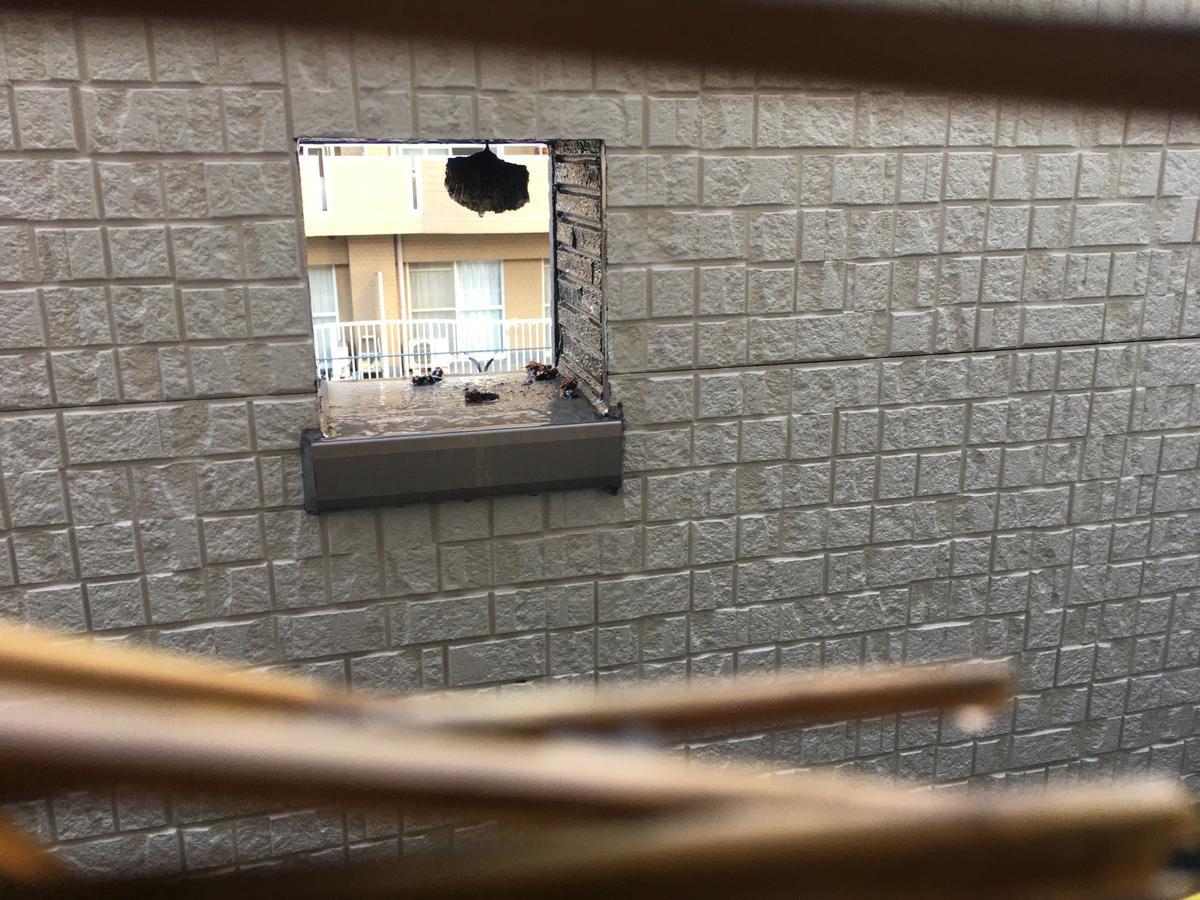 マグナムジェットで蜂の巣を攻撃後