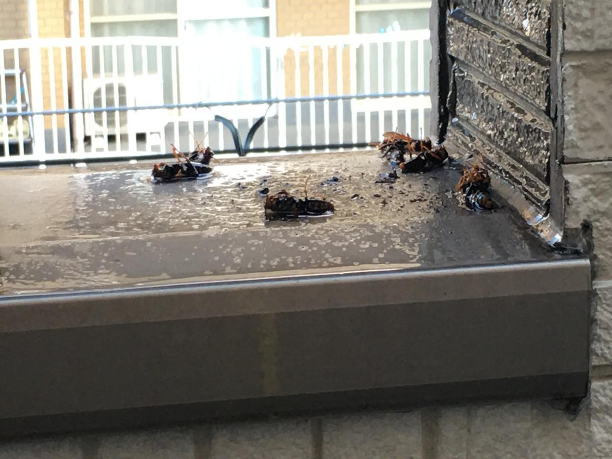 マグナムジェットで蜂の巣を攻撃後の拡大