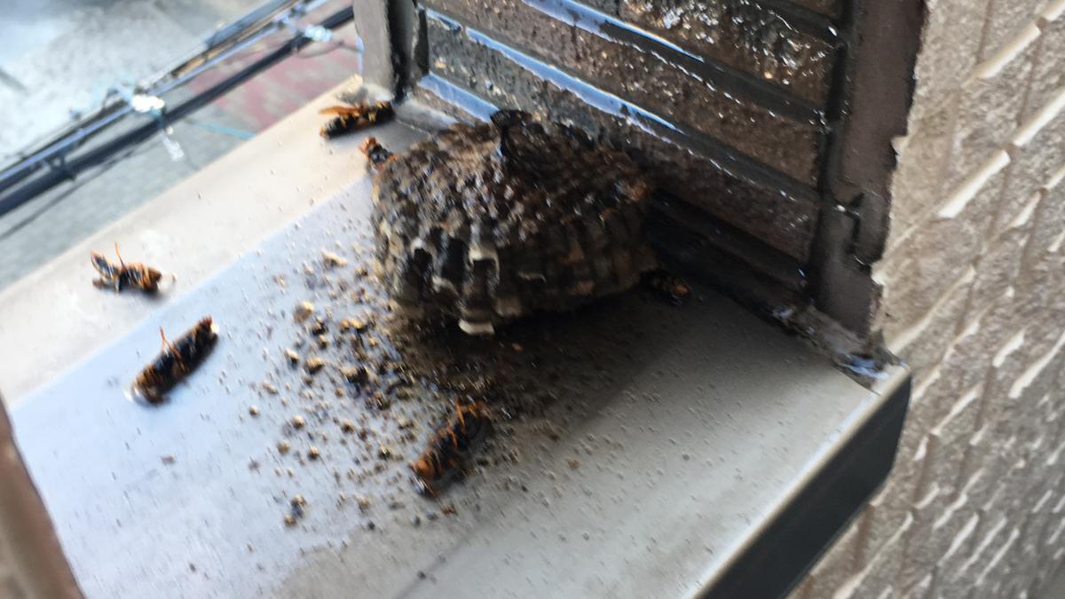 蜂の巣を退治ごに接近、拡大