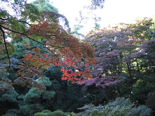 紅葉in殿ヶ谷戸庭園