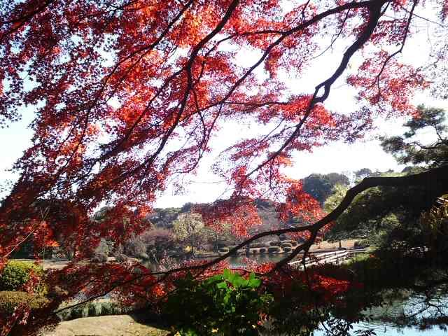 新宿御苑日本庭園にて