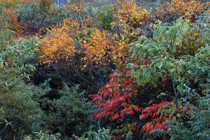 谷川岳,ちょっとだけ紅葉してます
