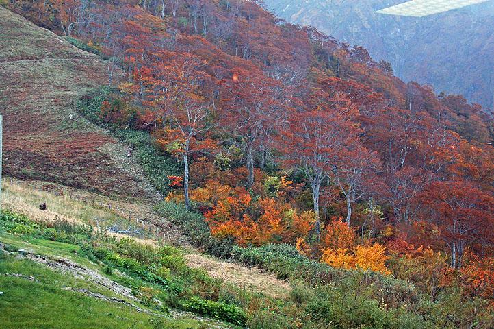 ガラス越しに,谷川岳の紅葉を