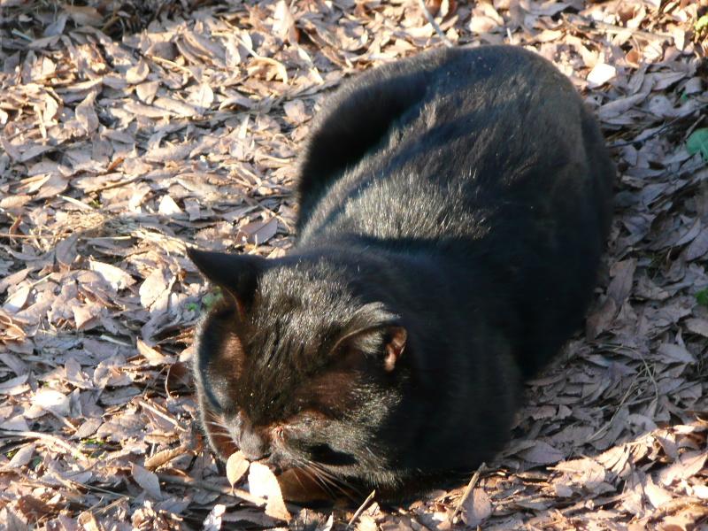 日だまりでまどろむ猫