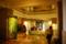 皇居のタヌキの展示