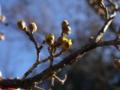春の始まり