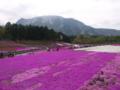 埼玉県秩父市の羊山公園からのお天気カメラです