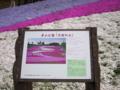 ここは羊山公園の芝桜の丘です