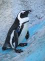 ペンギンはいつものんびり