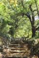 ハイキングコースの遊歩道に見えるが,お寺の参道