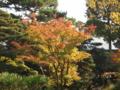 京都御所も色づき始めた