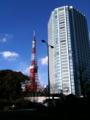 東京たわぁっ