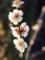 明るいと花は映える