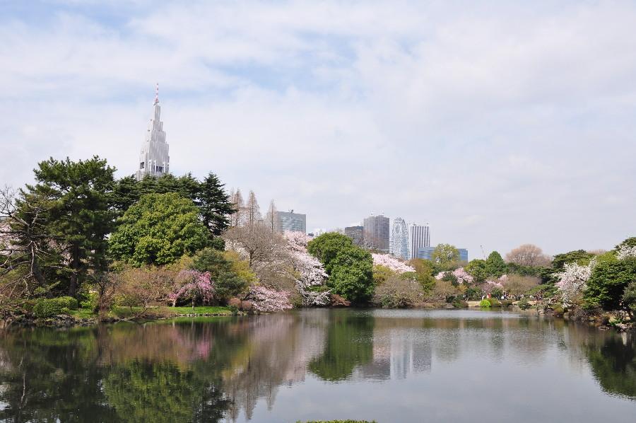 湖中にも桜