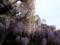 紫と白のコントラスト