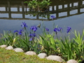 燕子花の季節