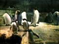 ペンギンペンギン