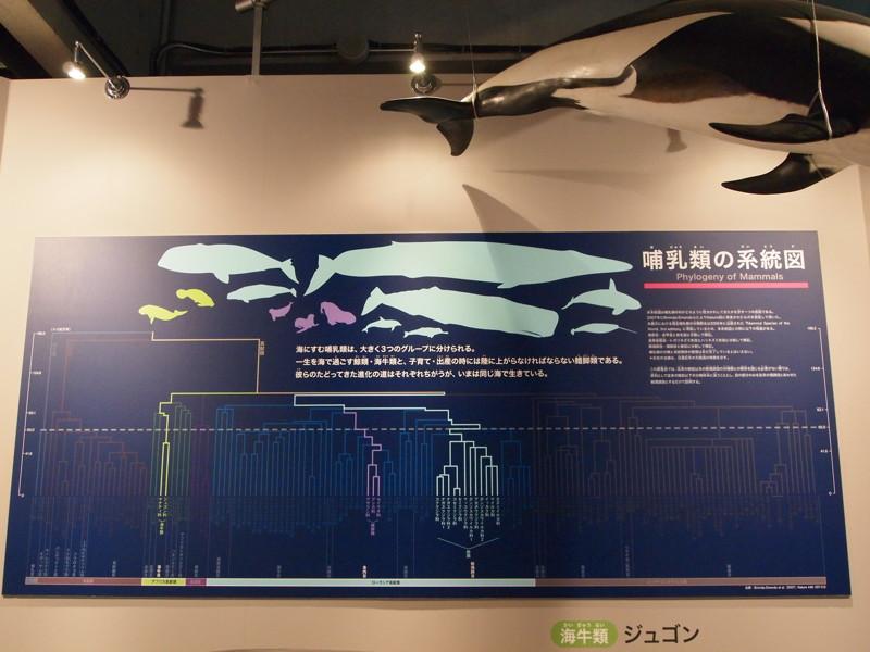 海の哺乳類は3種類に分かれます