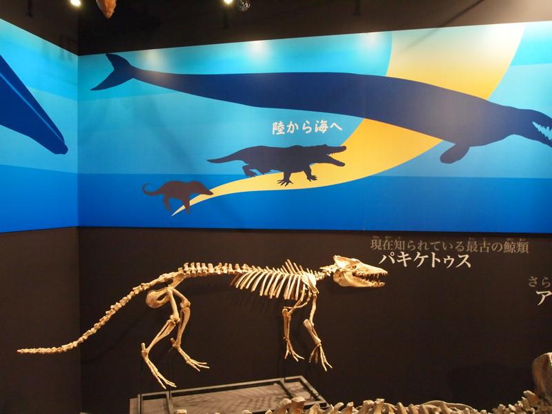 最初のクジラには足がある