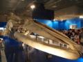 シロナガスクジラの、口っ