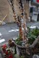 六本木アートナイト 藤浩志 路上 六本木 現代アート 犬 おもち