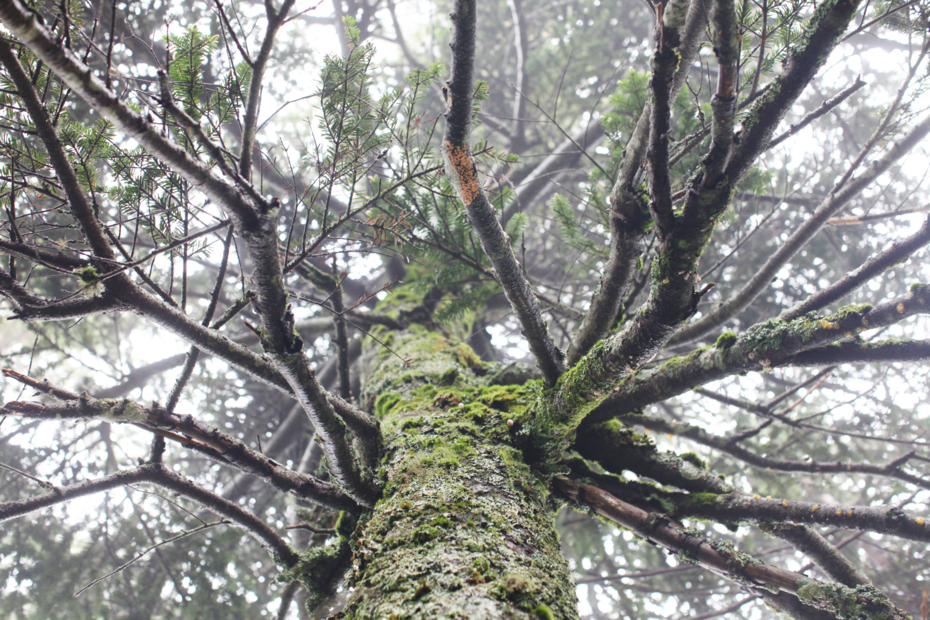 http://cdn-ak.f.st-hatena.com/images/fotolife/M/MAREOSIEV/20120806/20120806231617.jpg