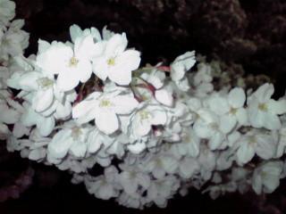 f:id:MAROON:20090404172126j:image:left