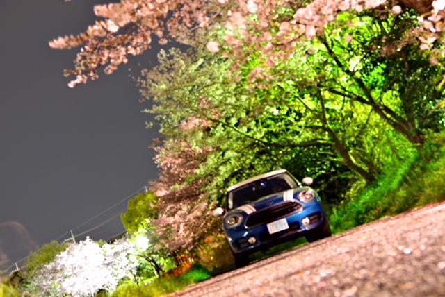 槙尾川緑道付近(川沿い)の夜桜