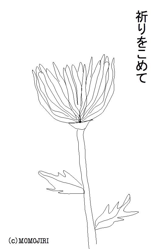 後藤真希に捧げる菊の花のイラスト
