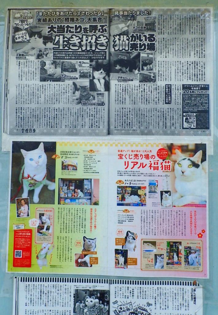 リアル福猫の記事