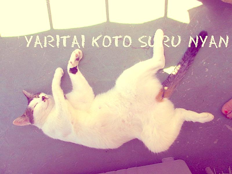 白黒の猫が寝っ転がってる写真