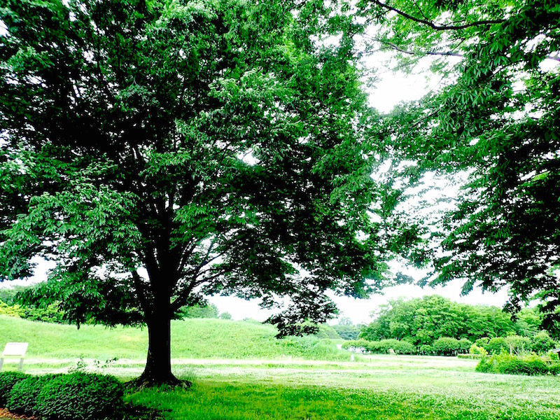 緑の樹々が気持ちい古墳