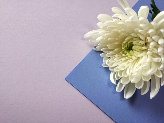 袱紗と白い菊の花