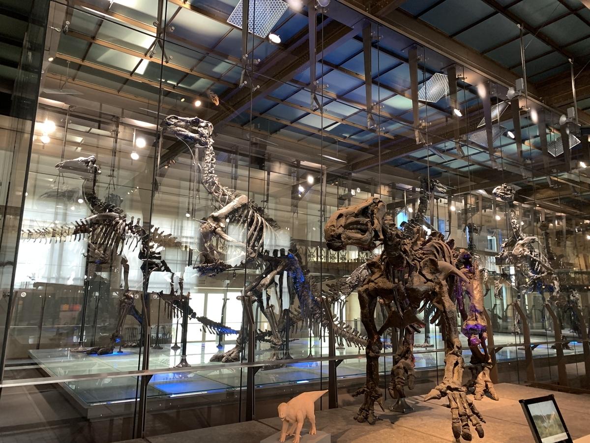 ブリュッセル 自然科学博物館