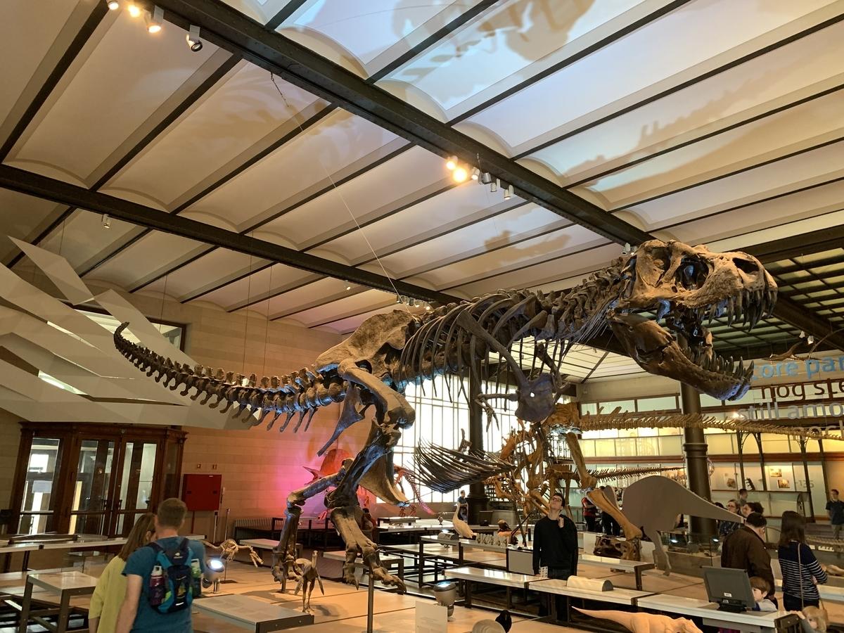 ブリュッセル ティラノサウルス