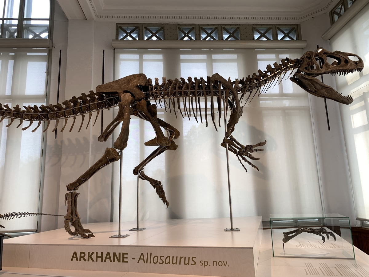 ブリュッセル アロサウルス