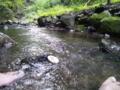 プリン「はひー、川はたまんねーなw放浪してえなーwww」