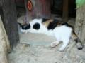 毛並みの良いのは幸せ猫、だがハゲは!