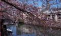 [FILM][横浜][大岡川][桜]桜の青空