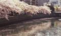 [FILM][横浜][大岡川]