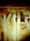 ヒヤシンスの根/VQ1015+クローズアップレンズ