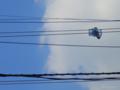[くちぶえ][Haiku]電線