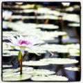 [旅][Instagram]掛川花鳥園