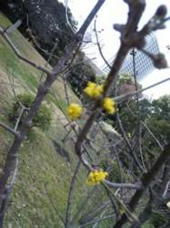 f:id:Magnoliarida:20100313143014j:image