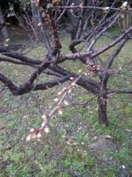 f:id:Magnoliarida:20100313143016j:image