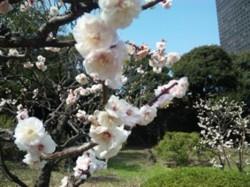 f:id:Magnoliarida:20100313143020j:image