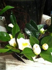 f:id:Magnoliarida:20130219220900j:image