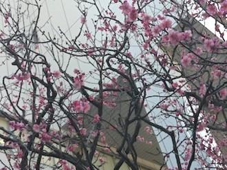 f:id:Magnoliarida:20130224004913j:image