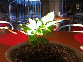 f:id:Magnoliarida:20130224005456j:image