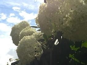 f:id:Magnoliarida:20130615223814j:image